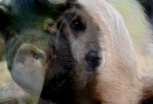 Photo of Traiter de chien ou de porc, les expressions d'une petite défaite